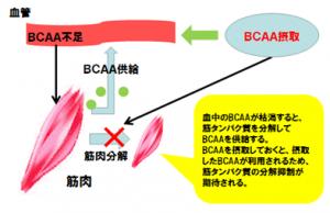 BCAA エクスプロージョンサプリメントシリーズ